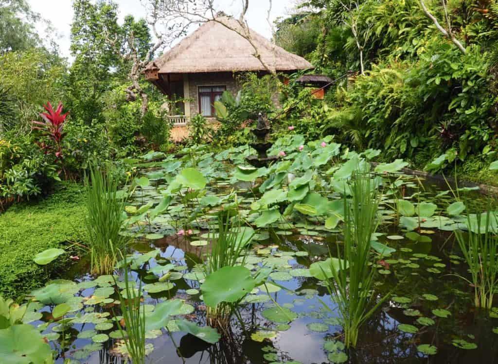 Lilly pond at TjampuhanSpa